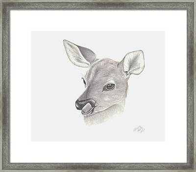 Framed Print featuring the drawing Baby Deer by Patricia Hiltz