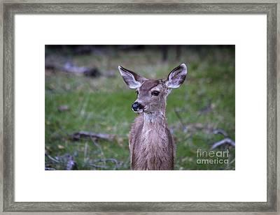 Baby Deer Framed Print
