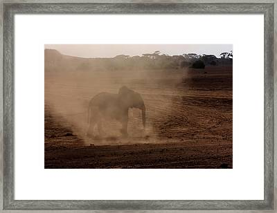 Framed Print featuring the photograph Baby Elephant  by Amanda Stadther