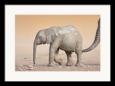 Assuring Framed Prints