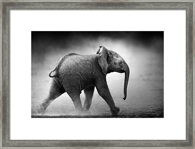 Baby Elephant Running Framed Print by Johan Swanepoel