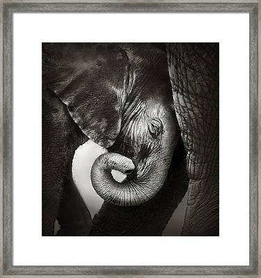 Baby Elephant Seeking Comfort Framed Print by Johan Swanepoel