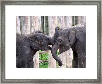 Baby Elephants - Bowie And Belle Framed Print by Pamela Critchlow