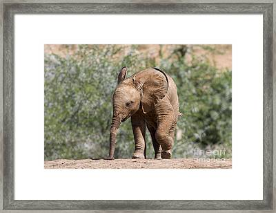 Baby Series Elephant Framed Print