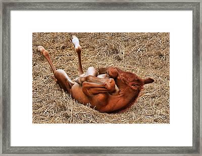 Baby Enya Framed Print by Leslie Kirk