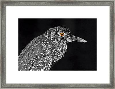 Baby Face 2 Framed Print by HH Photography of Florida