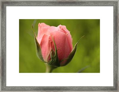 Baby Face Framed Print by Connie Handscomb