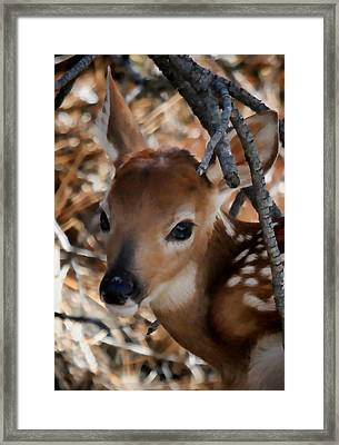 Baby Face Fawn Framed Print
