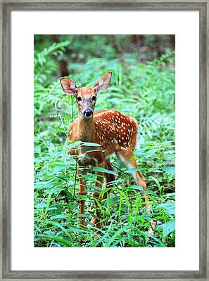 Baby Fawn Framed Print by Lorna Rogers Photography