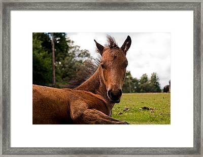 Baby Foal Framed Print