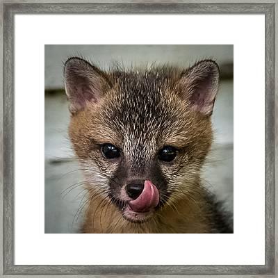 Baby Fox Framed Print by Paul Freidlund