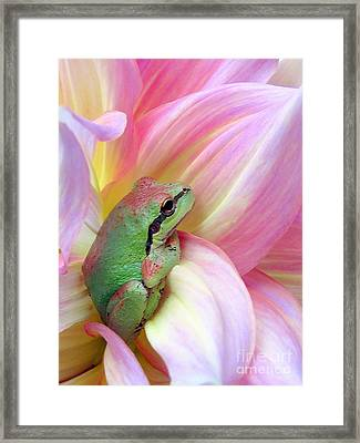 Baby Frog Framed Print by Irina Hays