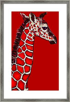 Baby Giraffe In Red Black And White Framed Print