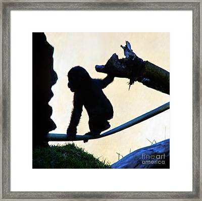 Baby Gorilla At Play Framed Print by Jim Fitzpatrick