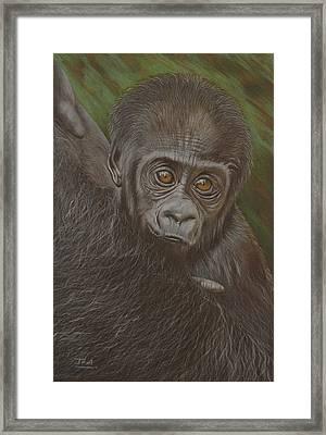 Baby Gorilla - Little Djemba Framed Print