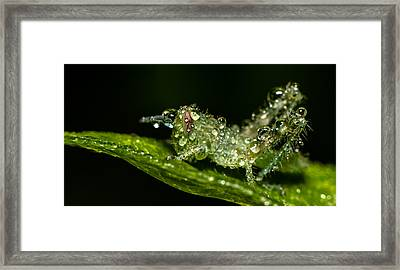 Baby Grass Hopper Framed Print by Tin Lung Chao