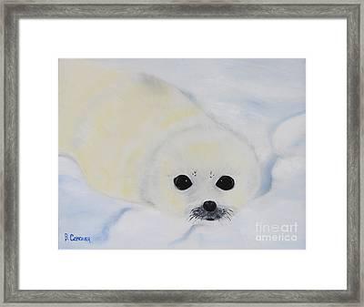 Baby Harp Seal Framed Print by Bev Conover