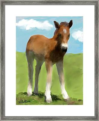 Framed Print featuring the painting Baby Horse by Mary M Collins
