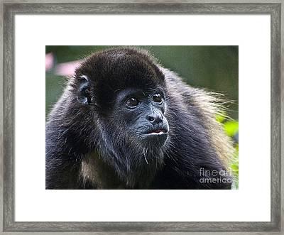 Baby Howler Monkey  Framed Print by Heiko Koehrer-Wagner