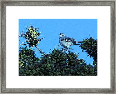Baby In Blue Framed Print by Linda Phelps