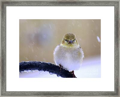 Baby Its Cold Outside Framed Print by Brenda Bostic