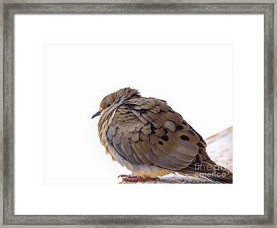 Baby It's Cold Outside Framed Print by Julie Clements