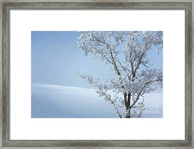 Baby It's Cold Outside Framed Print by Beve Brown-Clark Photography