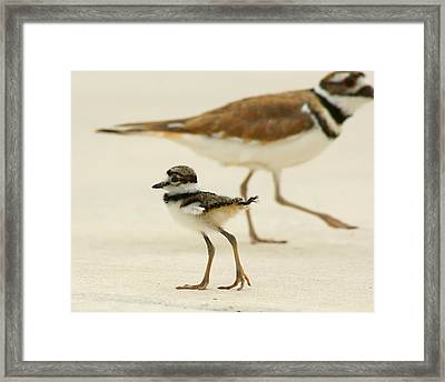 Baby Killdeer Framed Print by Jeremy Farnsworth