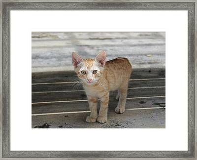 Baby Kitty Framed Print