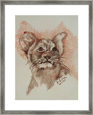 Baby Lion Framed Print by Deborah Gorga