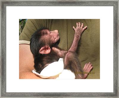 Baby Monkey Framed Print by Dick Willis