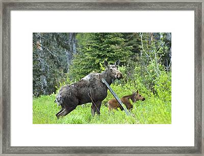 Baby Moose - Mom Framed Print