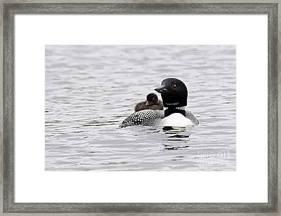 Baby On Board Framed Print