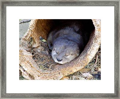 Baby Otter Framed Print by Mary Deal