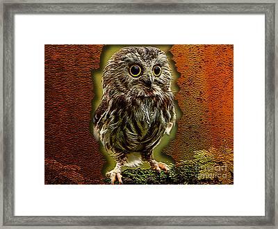 Baby Owl Framed Print by Marvin Blaine