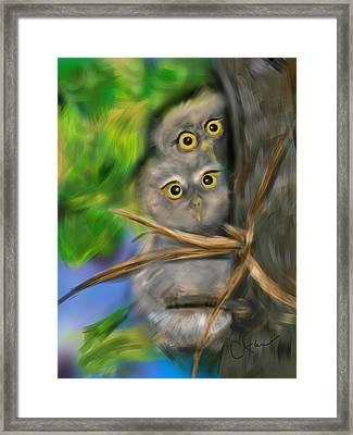 Baby Owls Framed Print by Christine Fournier