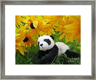 Baby Panda Under The Golden Sky Framed Print
