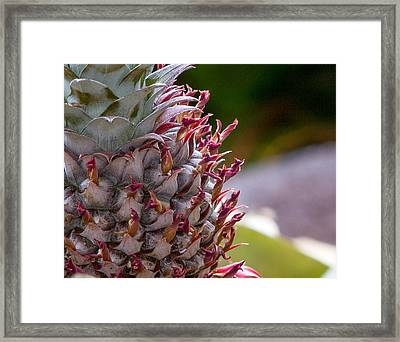 Baby White Pineapple Framed Print