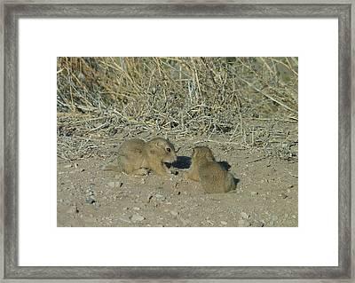 Baby Prairie Dog Framed Print