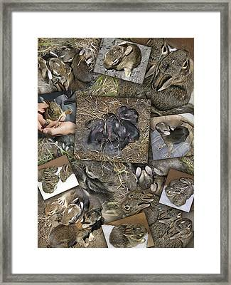 Baby Rabbits Framed Print