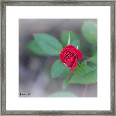 Baby Red Framed Print