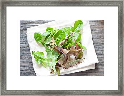 Baby Salad Leaves Framed Print by Tom Gowanlock