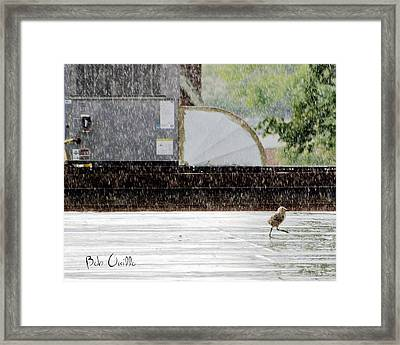 Baby Seagull Running In The Rain Framed Print by Bob Orsillo