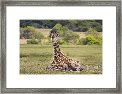 Baby Series Giraffe Framed Print