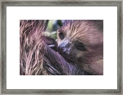 Baby Sloth Framed Print