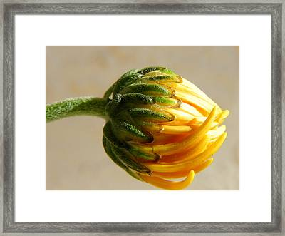 Framed Print featuring the photograph Baby Spider Mum by Deb Halloran