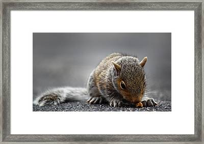 Baby Squirrel Gets A Snack Framed Print by Andrew Pacheco