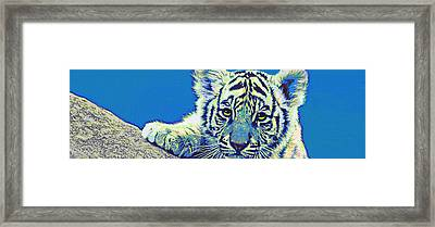 Baby Tiger- Blue Framed Print by Jane Schnetlage