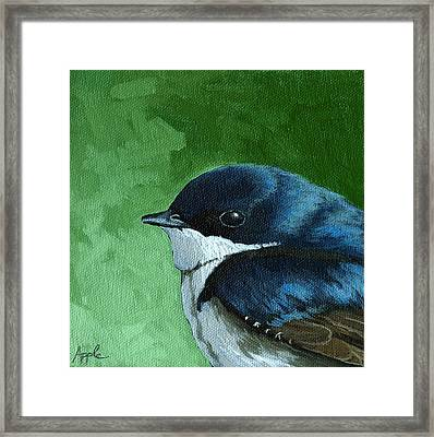 Baby Tree Swallow Framed Print