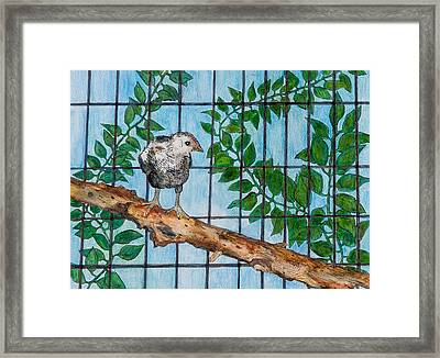 Baby Tugen Framed Print by Sandee Johnson
